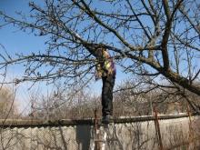 Обрезка деревьев, санитарная и декоративная