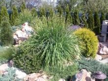 Злаковые в озеленении. Автоматический полив газонов и растений.