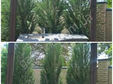 Формировочная стрижка можжевельников, обрезка плодовых и декоративных растений