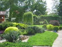 Идеальное сочетание лиственных и хвойных растений