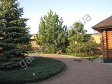 Ель, сосны, бревенчатый дом. Естественная комбинация растений и построек.