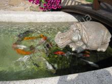 Карпы Кои в декоративном водоеме.