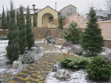 Хвойники зимой. Ландшафтный дизайн.